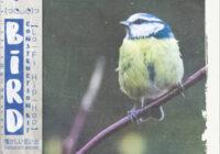 Kryptic Samples Bird Vol. 1 WAV MIDI